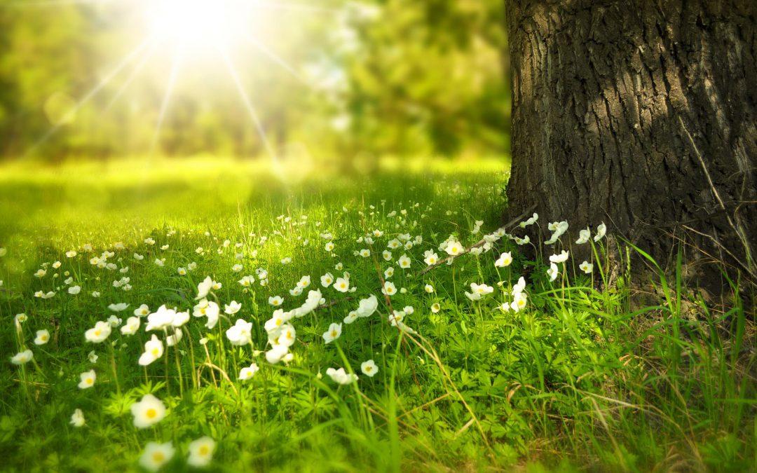 Zonneschijn straalt bloemen