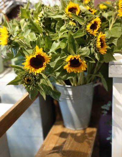 Bloemsierkunst Groeneveld heeft nieuwe aanwinsten in de bloemenwinkel in Haren Groningen