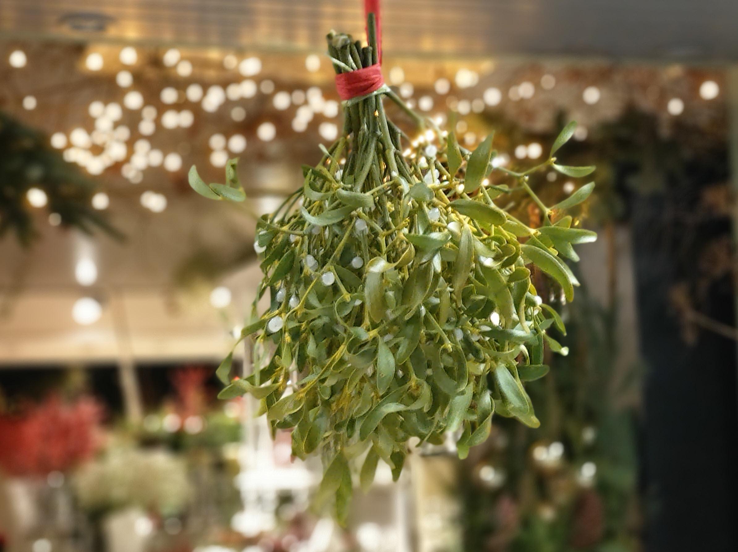 Mistletoe, ofwel Maretak, als teken van liefde en vriendschap. Rond de kerst en nieuwjaar te koop bij Bloemsierkunst Groeneveld te Haren Groningen