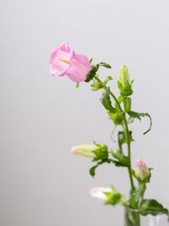 Bloemsierkunst-Groeneveld-zomerbloemen-campanula
