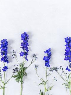 Bloemsierkunst-Groeneveld-zomerbloemen-delphinium