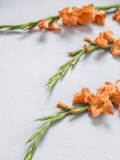 Bloemsierkunst-Groeneveld-zomerbloemen-gladiool