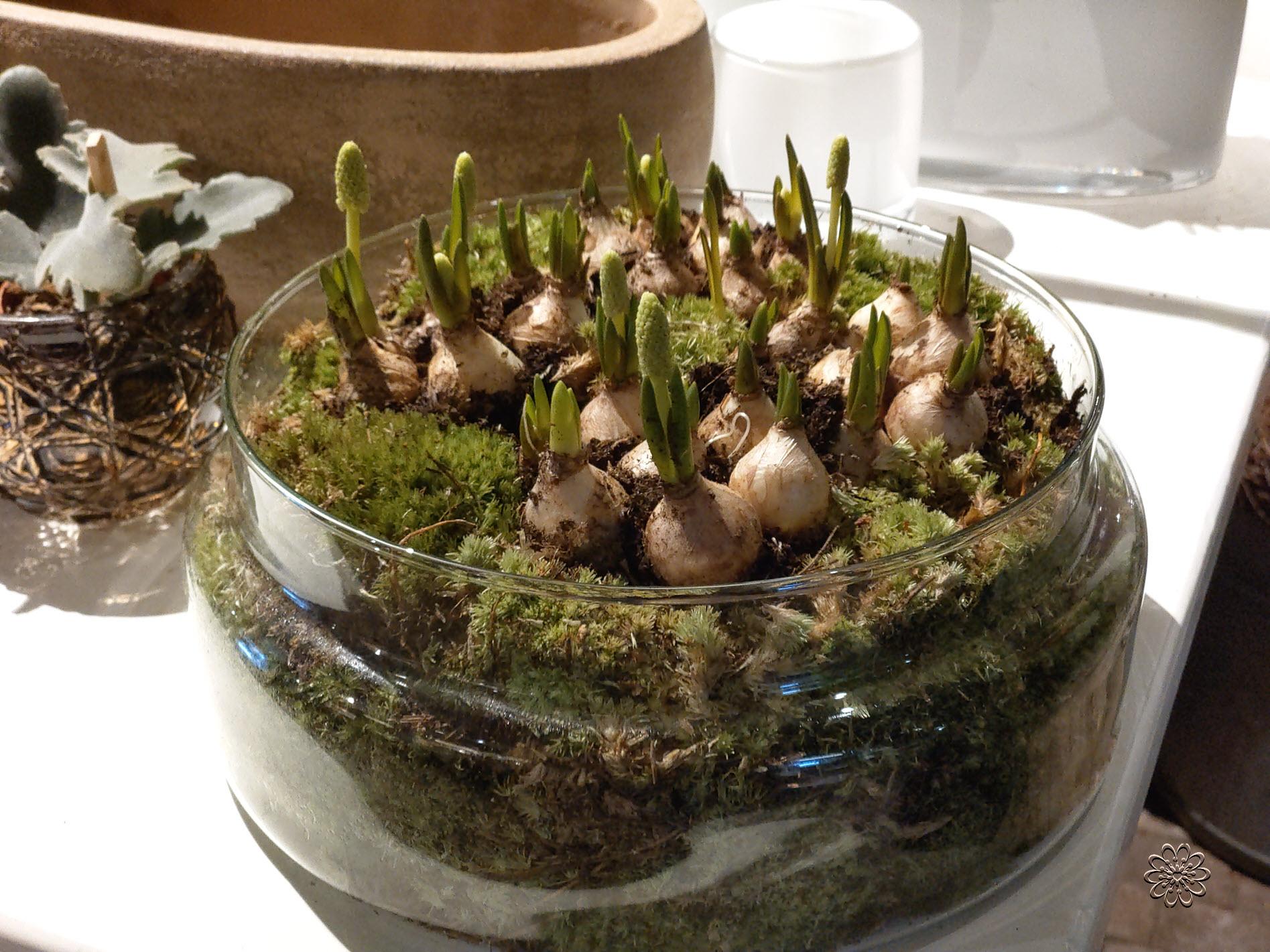 Bloemsierkunst Groeneveld bloemenwinkel Haren Groningen voor kamerplanten en bloembollen