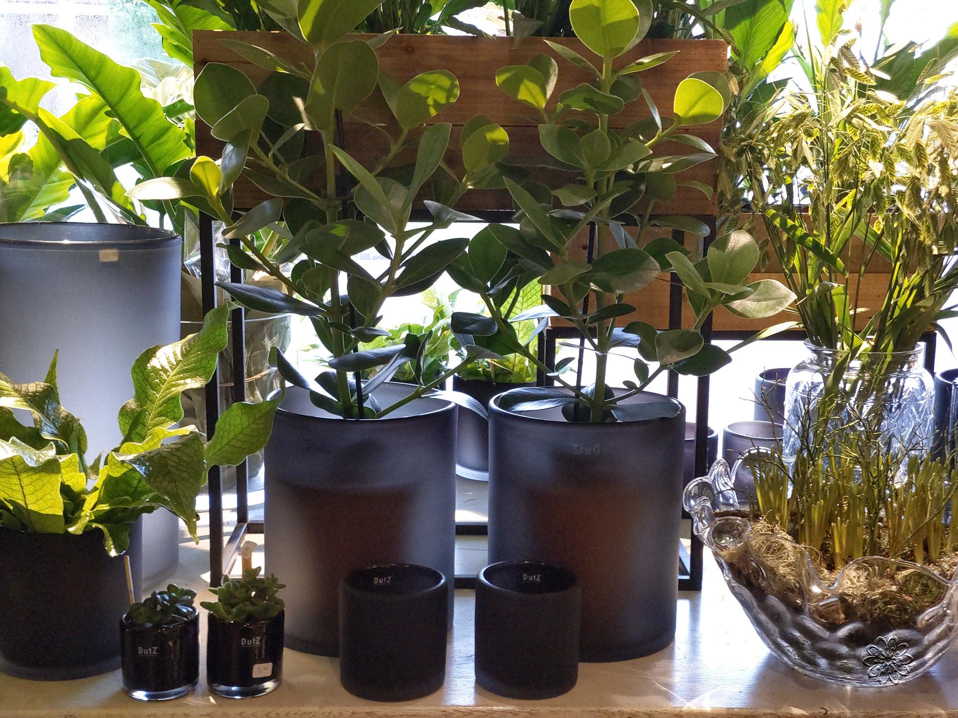 Bloemsierkunst-Groeneveld-kamerplanten-bollen-05