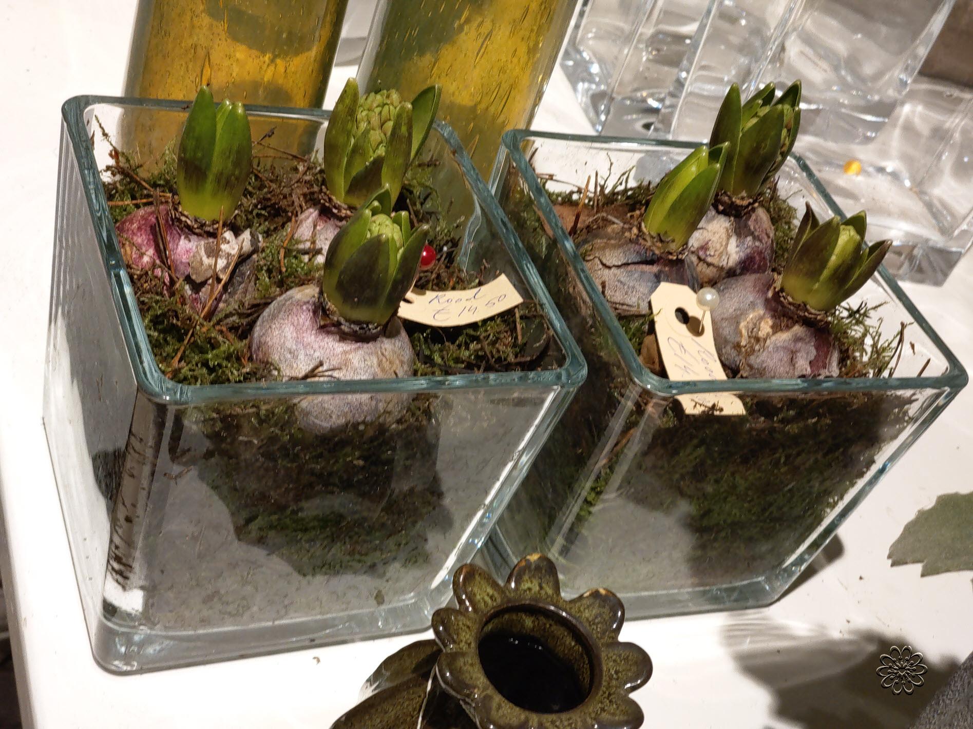 Bloemsierkunst-Groeneveld-kamerplanten-bollen-14
