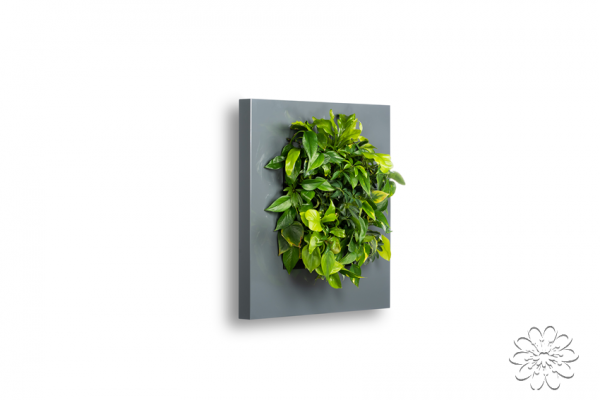 LivePicture plantenschilderij LivePicture 1