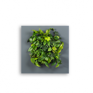 LivePicture plantenschilderij LivePicture 1 antraciet